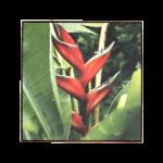 Quadro Botânico Strelitzia em Tecido Canvas para Sala Quarto Hall Escritório, 112X112cm, Quadro Emoldurado