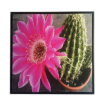 Quadro Botânico Cactus c/ Flor Rosa em Tecido Canvas para Sala Hall Área Externa, 53X53cm, Quadro Emoldurado na cor Preto