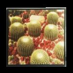 Quadro Cacto Grusoni do méxico em Tecido Canvas para Área Externas Sala Hall 53X53cm, Quadro Emoldurado na cor Preto