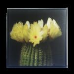 """Quadro Flor de Cacto """"Amarela"""" em Tecido Canvas para Área Externas Sala Hall, Quadro Emoldurado na cor Preto"""