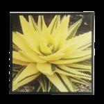 """Quadro em Tecido Canvas """"Aloe"""" para Área Externas Sala Hall Corredores, Quadro em Madeira Emoldurado na cor Preto"""