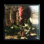 """Quadro em Tecido Canvas """"Cacto"""" Fotografia Angulo Superior, para Área Externas Sala Hall Corredores, Quadro em Madeira Emoldurado na cor Preto"""