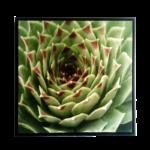 """Quadro em Tecido Canvas """"Agave"""" Fotografia Angulo Superior, para Área Externas Sala Hall Corredores, Quadro em Madeira Emoldurado na cor Preto"""