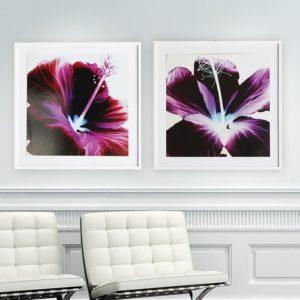 """Quadro Flor de Hibisco Roxa """"A & B"""" para Sala Quarto Hotéis Escritório, 60x60cm C/ Vidro 3mm e Moldura Reta na cor Branca"""