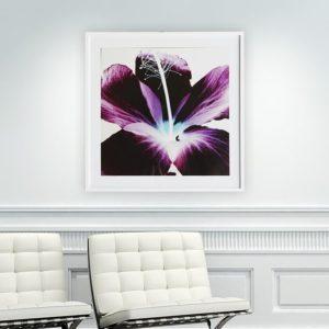"""Quadro Flor de Hibisco Roxa """"A"""" para Sala Quarto Hotéis Escritório, 60x60cm C/ Vidro 3mm e Moldura Reta na cor Branca"""