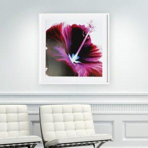 """Quadro Flor de Hibisco Roxa """"B"""" para Sala Quarto Hotéis Escritório, 60x60cm C/ Vidro 3mm e Moldura Reta na cor Branca"""
