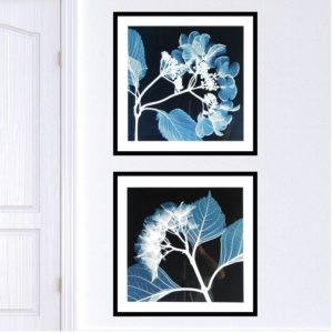 """Quadro Hydrangeas Negative """"A & B"""" para Sala Quarto Hotéis Escritório, 60x60cm C/ Vidro 2mm e Moldura na cor Preta"""