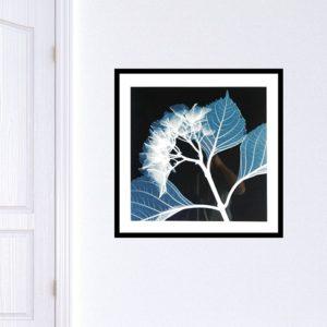 """Quadro Hydrangeas Negative """"A"""" para Sala Quarto Hotéis Escritório, 60x60cm C/ Vidro 2mm e Moldura na cor Preta"""