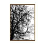 Par de Quadros Folhagens para Sala Quarto Hall Escritório, 35x50cm C/ Vidro 2mm e Moldura na cor Tabaco