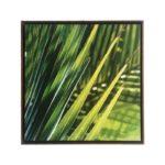 Trio de Quadros Botânicos Folhas de Palmeiras em Tecido Canvas para Sala Quarto Hall Escritório, 60X60cm, Quadro Emoldurado, Moldura na Cor Tabaco