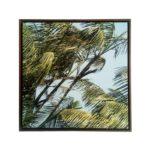 Quadro Botânico de Palmeiras em Tecido Canvas para Sala Quarto Hall Escritório, 60X60cm, Quadro Emoldurado, Moldura na cor Tabaco