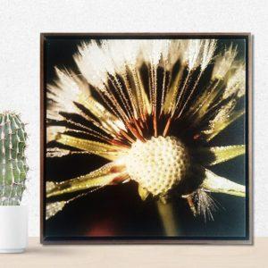 Quadro Botânico Dente de Leão em Tecido Canvas para Sala Quarto Hall Escritório, 60X60cm, Quadro Emoldurado, Moldura na cor Tabaco
