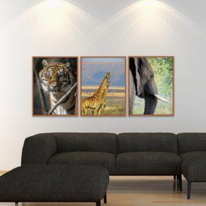 Trio de Quadros Tigre, Girafas e Elefante para Sala Quarto Hotéis Escritório, 80x60cm C/ Vidro 3mm e Moldura na Cor Mel