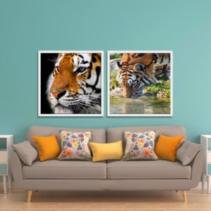 Par de Quadros Tigres Amarelos para Sala Quarto Hotéis Escritório, 80x80cm C/ Vidro 3mm e Moldura na Cor Branca