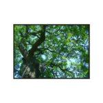 Quadro Árvore Verde para Sala Quarto Hotéis Escritório, 140x100cm C/ Vidro 3mm e Moldura na Cor Tabaco