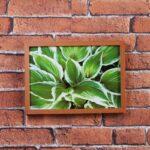 Kit de 4 Quadros de Folhagens Verdes para Sala Quarto Hotéis Escritório, 22,5×31,5 cm C/ Vidro 3mm e Moldura na Cor Mel