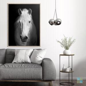 Quadro Cavalo Branco para Sala, Quarto, Hotéis, Escritório, 110x80cm C/ Vidro 3mm e Moldura na Cor Amadeirada.